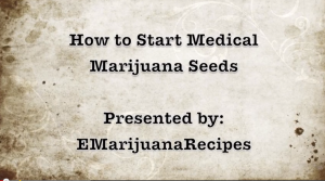 This video is for those looking to LEGALLY grow marijuana, we do not condone growing without a medical license issued by your state. This video shows you how to start a medical marijuana seed for hydroponic growing.