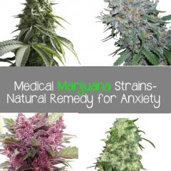 Top 4 Medical Marijuana Strains-Natural Remedy for Anxiety