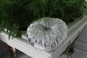 Ducting Pumpkin
