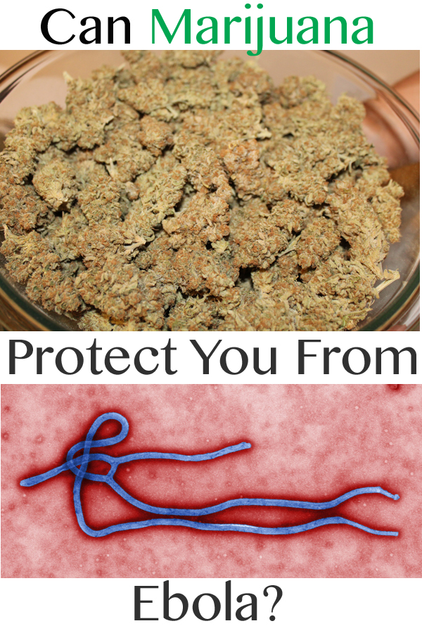 Can Marijuana Protect You From Ebola?