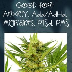 AK-47 Cannabis Strain Review